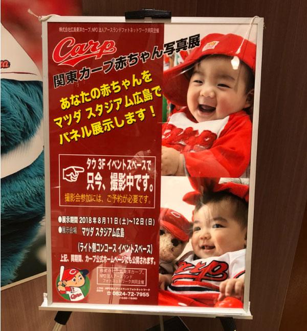 カープ赤ちゃん展